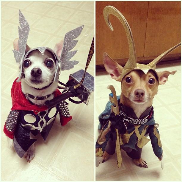 dog-cosplays (1)