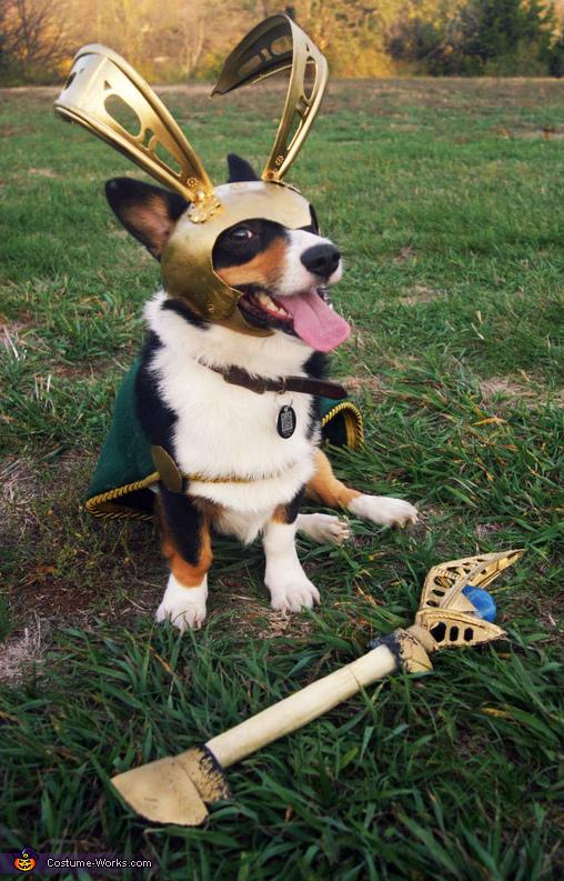 dog-cosplays (2)