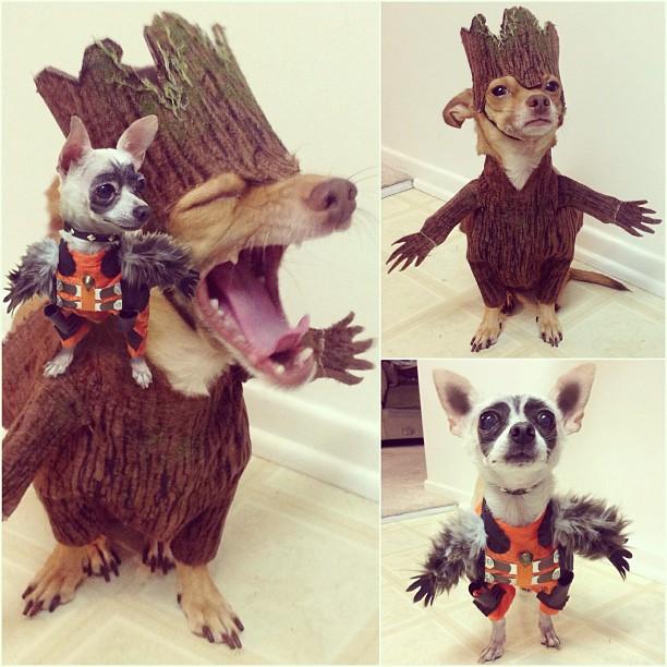 dog-cosplays (3)