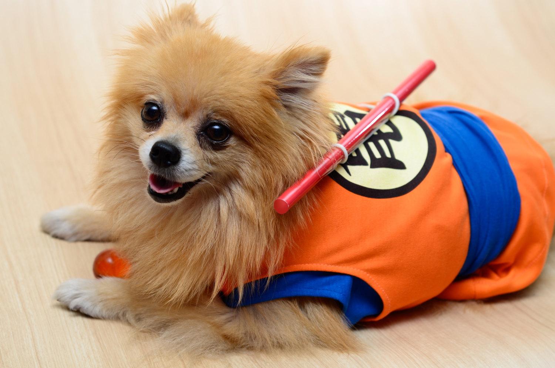 dog-cosplay (1)