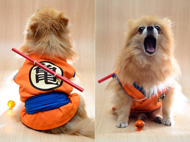 dog-cosplay (2)