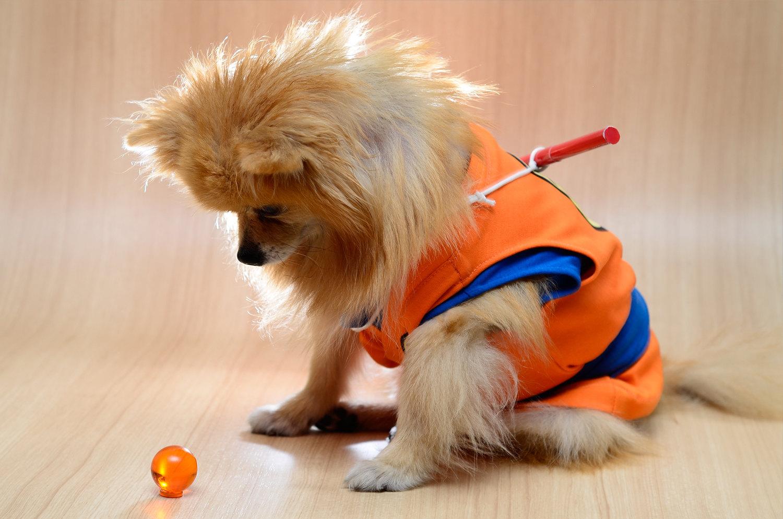 dog-cosplay (3)