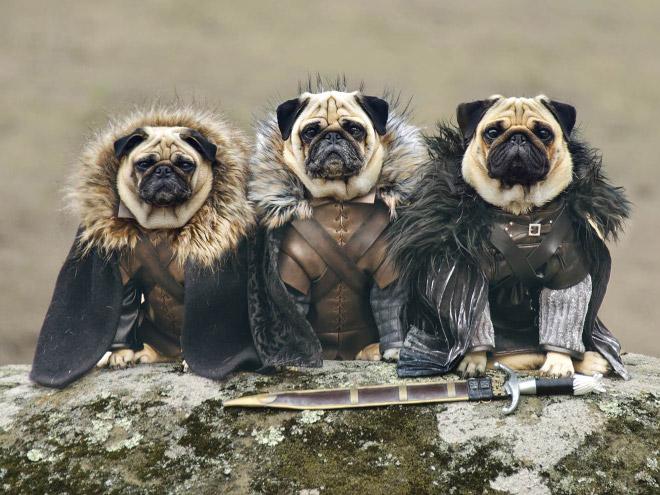 animais-cosplay (6)