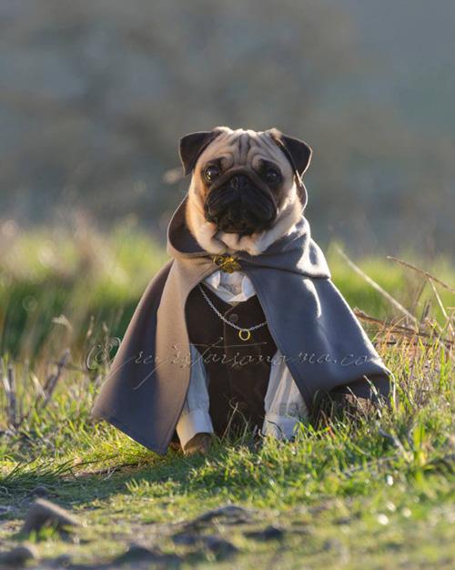 pugs-senhor-dos-aneis (6)