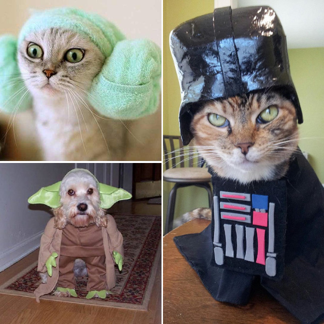 animais-cosplay (8)