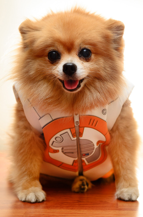 star-wars-roupinha-cachorro (3)