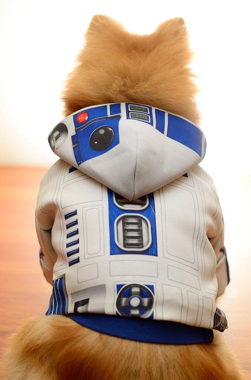 star-wars-roupinha-cachorro (7)